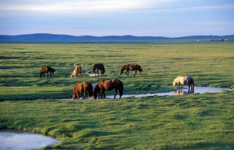 Notes from Mongolia